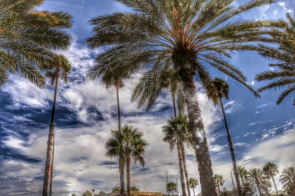 Palmbomen onderweg naar Disneyland
