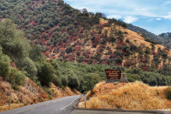Route naar Sequoia National Park
