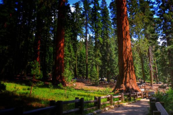 Wandeling Sequoia National Park bezoeken