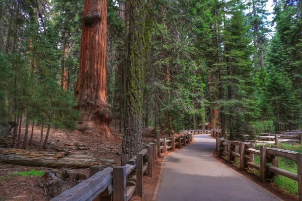 Wandeling Sequoia Park