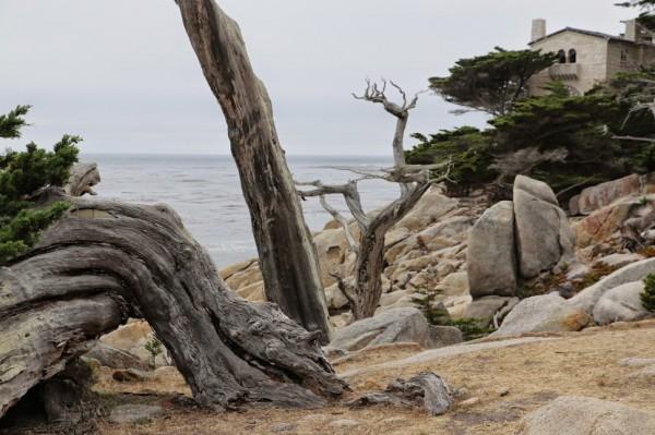 Monterey 17 mile drive 1