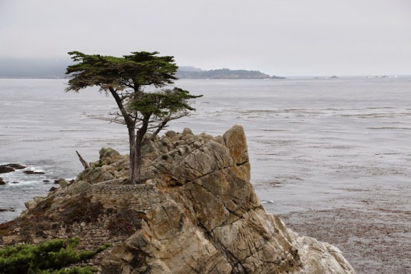 Monterey 17 mile drive lonely cedar