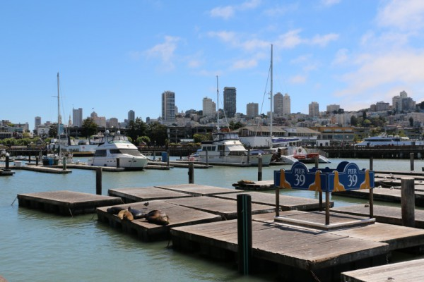 Pier 39 zeeleeuwen