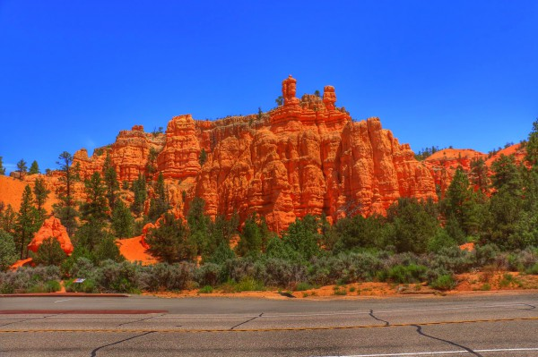 Red Canyon Dixie Forest