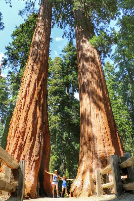 Sequoia's in National Park Californie