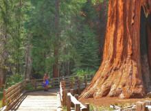Wandeling Sequoia Park Californie