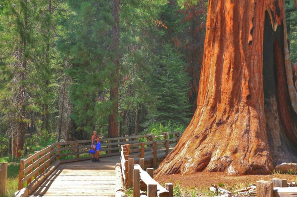 Wandeling Sequoia Park Californie