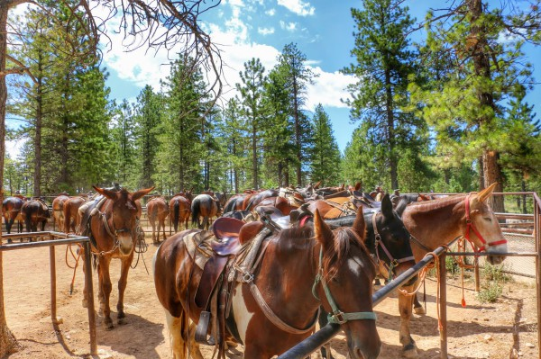 Paarden Bryce Canyon