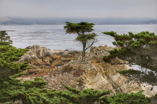 Lone Cypress 17-Mile Drive