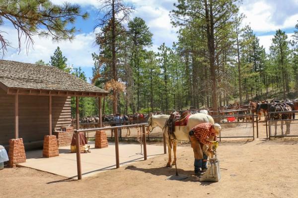 Horseback riding Bryce Canyon